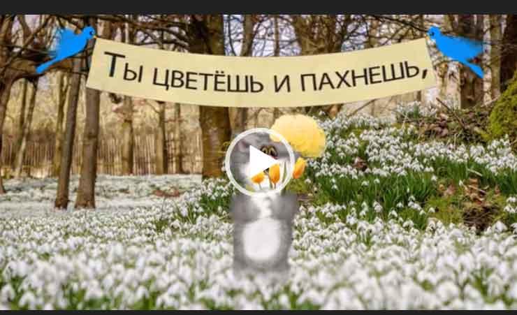 С днем рождения в марте. Милое и красивое видео поздравление для ватсапа.