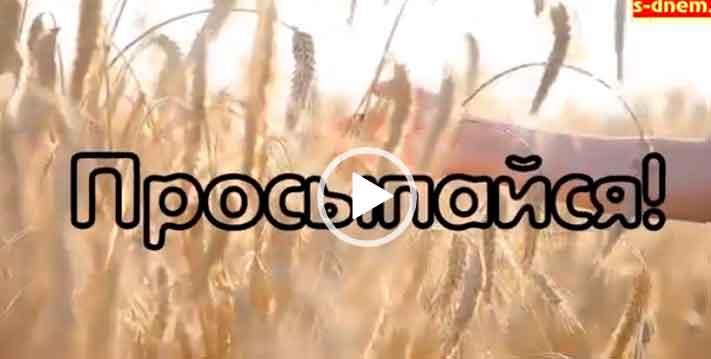 Видео открытки с добрым утром и добром. Скачать бесплатно.