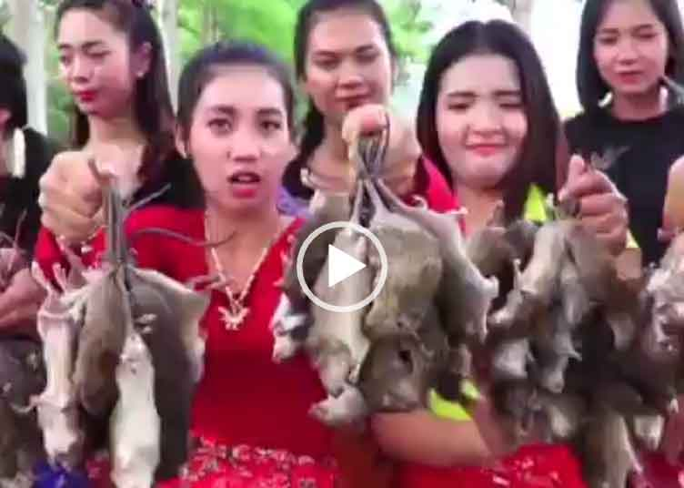 Кушают крыс грызунов. Невероятное видео для вацапа.