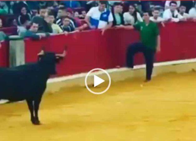 смешное видео с быками