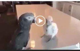 Всегда наслаждайся жизнью. Прикол с попугаем.