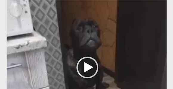 Интересное видео про собак